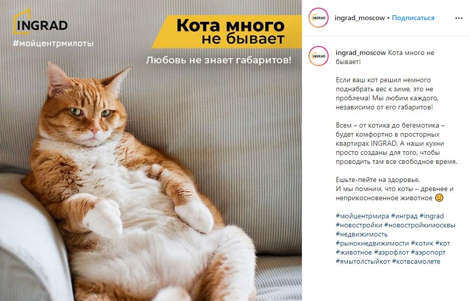 Помните историю кота, которого не пустили на рейс из-за большого веса? Мы любим котов #котвсамолете